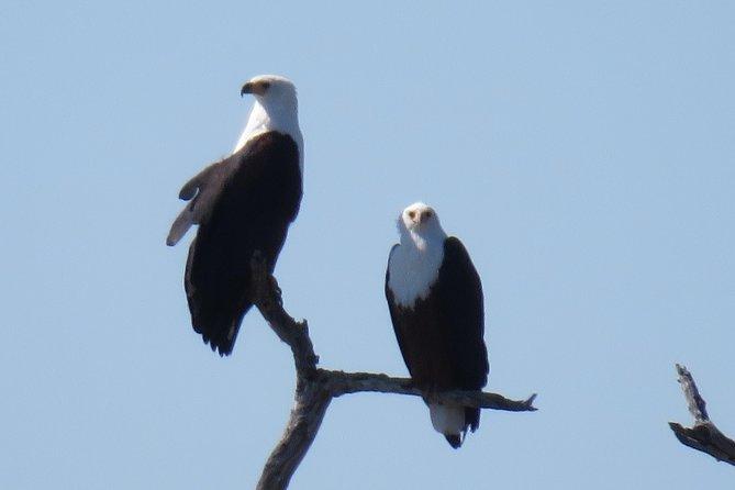 7 Days Fish Eagle