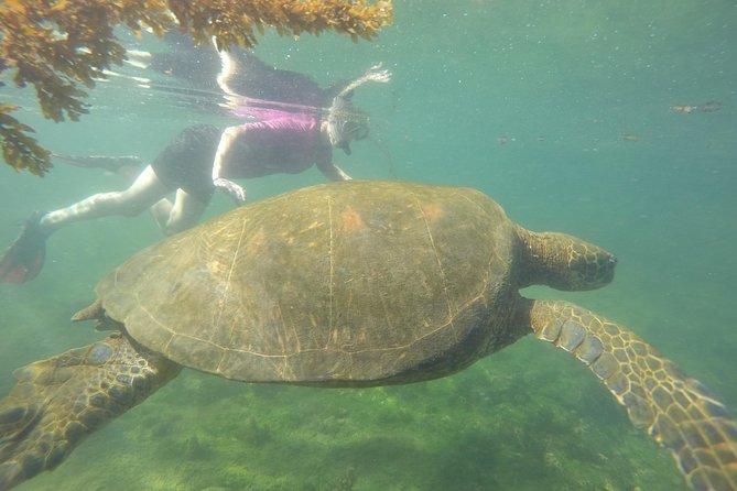 6-Day in Santa Cruz & Isabela Islands Galapagos Land-based/Low budget