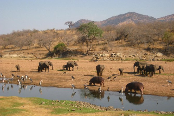 6 Days Explore Tanzania's Southern Wildlife Circuit