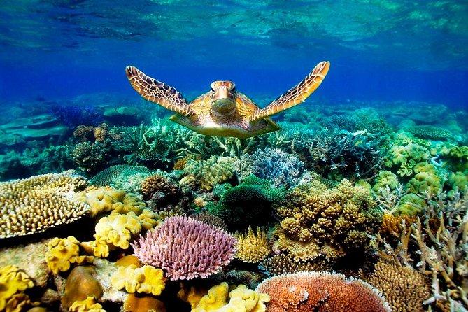 4-Day Cairns Ultimate Combo: Daintree Rainforest, Reef, Kuranda & Paronella Park