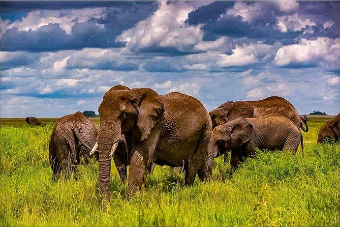 10 - Day Tanzania Private Luxury Safari