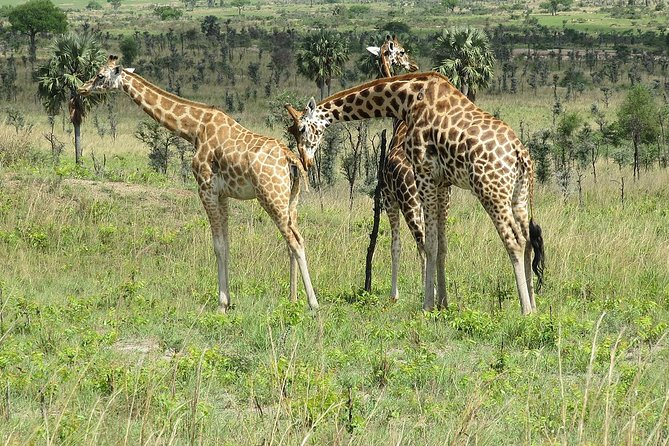 6 Day Uganda Safari in Murchison Falls and Bwindi Impenetrable Park photo 1