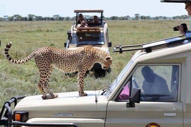 Tanzania Camping Safari - 7 days