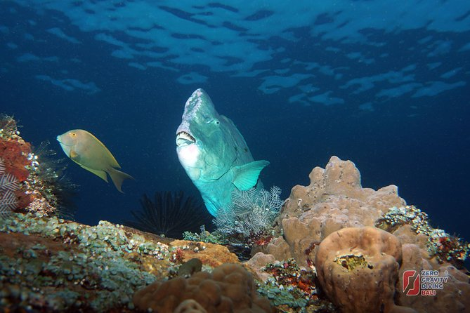Scuba Diving at Tulamben USAT Liberty Wreck