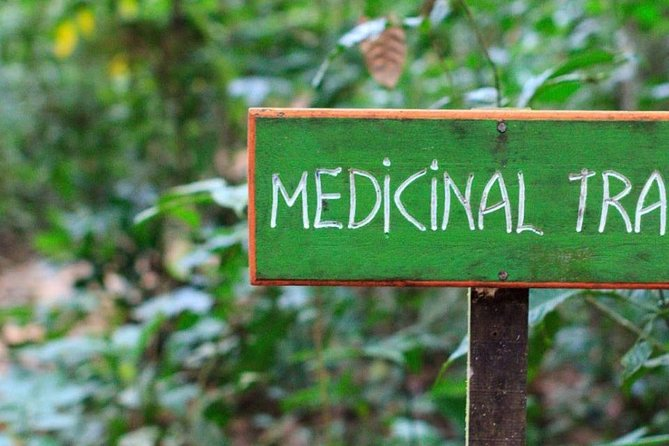 Medicinal trail and Cave Tour
