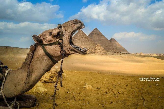 Excursión de 8 días a El Cairo y el crucero por el Nilo 4 estrellas