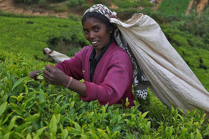 Kandy Nuwaraeliya 02 Days Tour From Colombo or Negombo