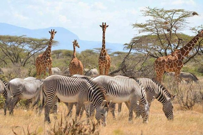 7-Day Maasai Mara, Lake Nakuru, Lake Naivasha and Samburu Safari from Nairobi