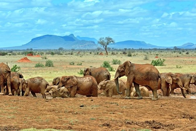 Private 3-Day Tsavo Safari from Mombasa