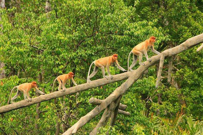 Stray Asia: 9 Day Borneo Explorer Tour