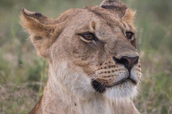 3-Day Selous Reserve mid-Range Safari