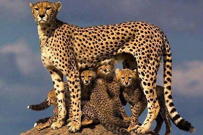 3 Days Masai mara Private safari