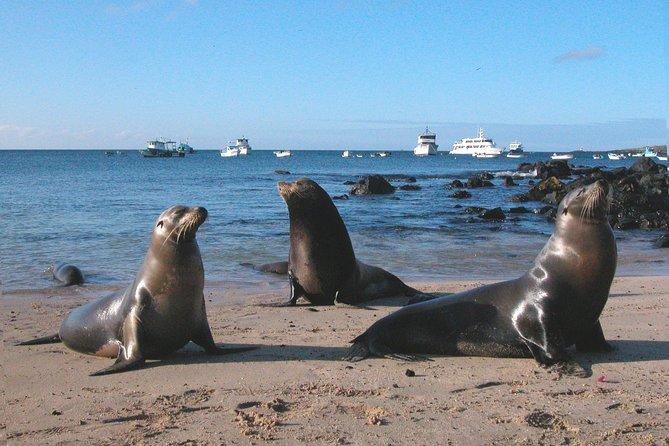 9 Day Galapagos Islands Classic - Group Tour