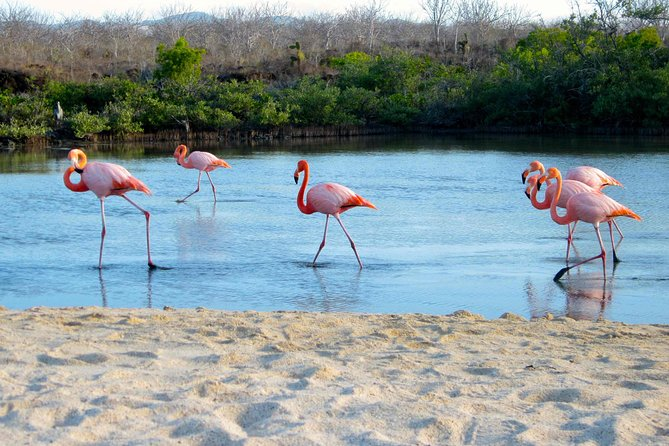 8-Day Galapagos Island Hopping Classic