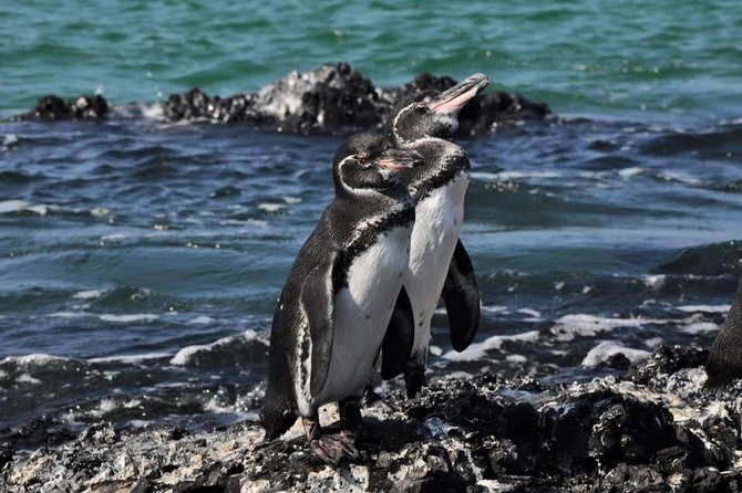 6-Day All Inclusive Galapagos Island Hopping