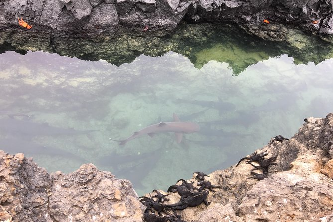 6-Day Galapagos Island Hopping Budget
