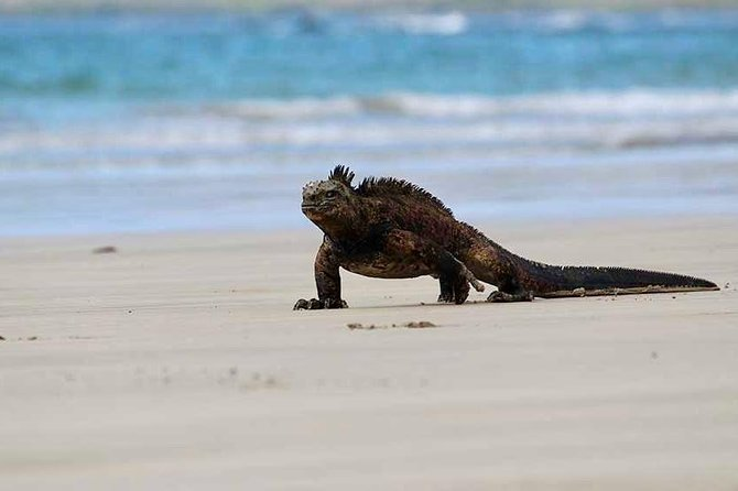 5-Day All Inclusive Galapagos Island Hopping Tour - Tourist Class