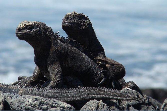 """4 Days Galápagos – """"Las Grietas and Tortuga Bay Tour"""""""