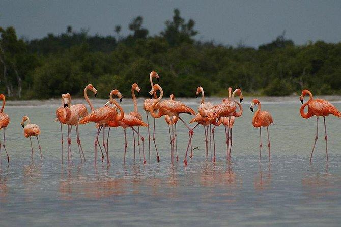 10-Day Wildlife Adventure Ecofriendly Tour from Cancun