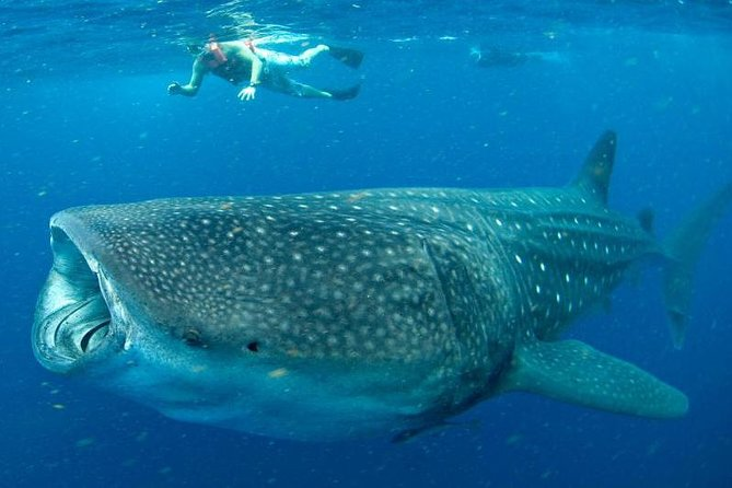 7 Day- Whale Shark Ecofriendly Tour in Cancun photo 1