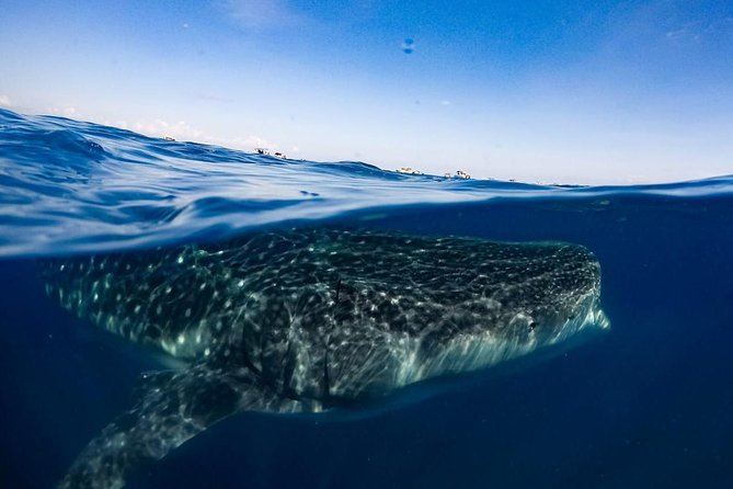 7 Day- Whale Shark Ecofriendly Tour in Cancun photo 10