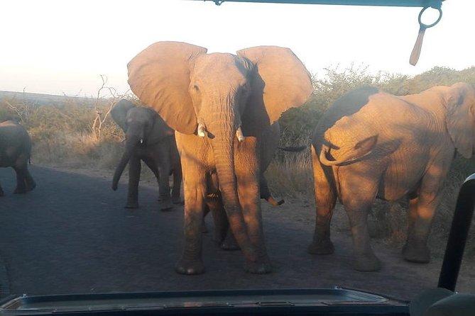 2 Day Tented Safari in the Pilanesberg