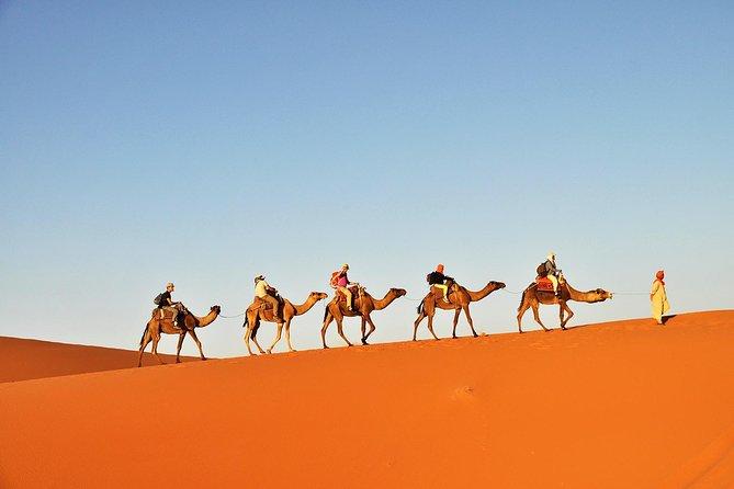 Tunisian Sahara Camel Trek