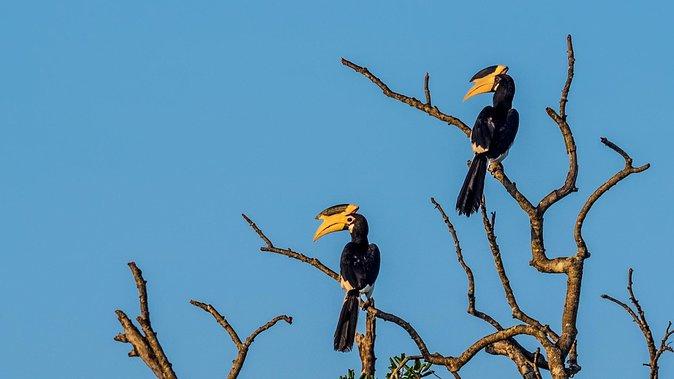 2 Days Tour to Yala & Kumana National Park From Colombo