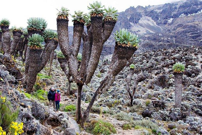 Climb Mount Kilimanjaro: 6 Days Machame Route