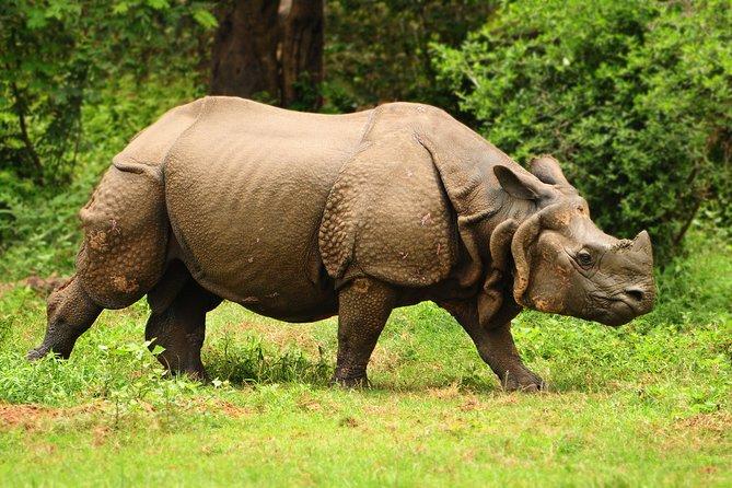Kaziranga Indian Big Five Wildlife Tour