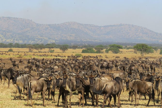 6 Days Ndutu Calving Season Migration Safari