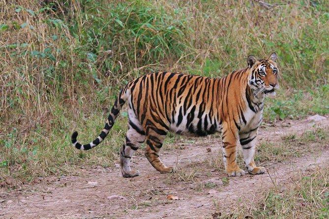 Sariska Tiger Tour Of India