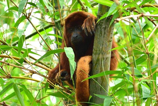 Monkey Hike in Nariva Swamp