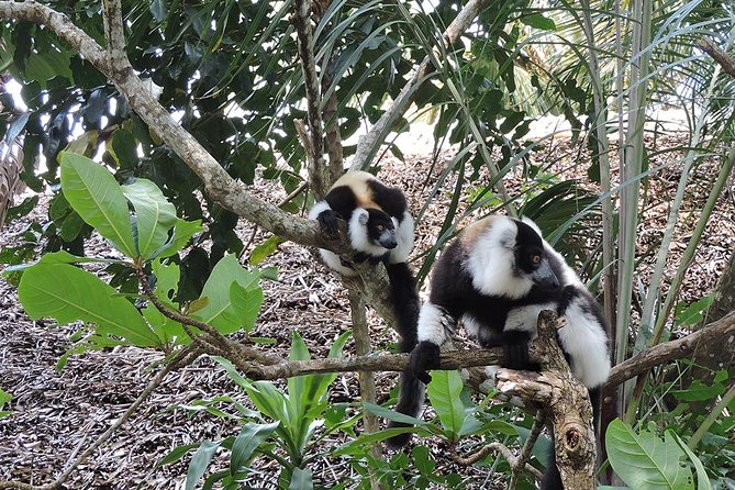 Private Tour for the Highlights of Madagascar