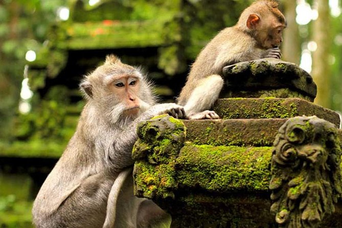 Private Ubud Area, Tegalalang Rice Terrace & Monkey Forest Tour