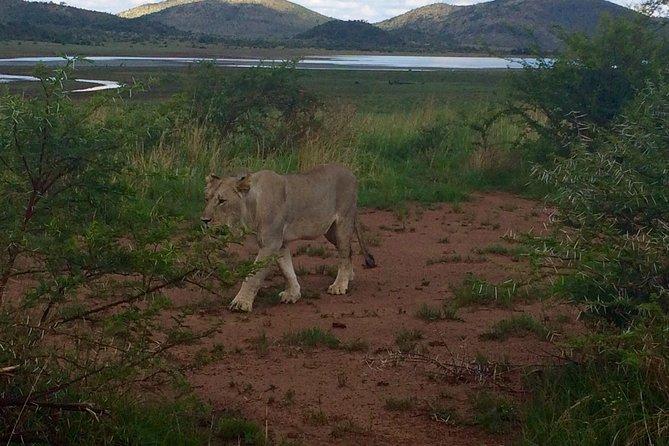 1 Day Safari from Johannesburg
