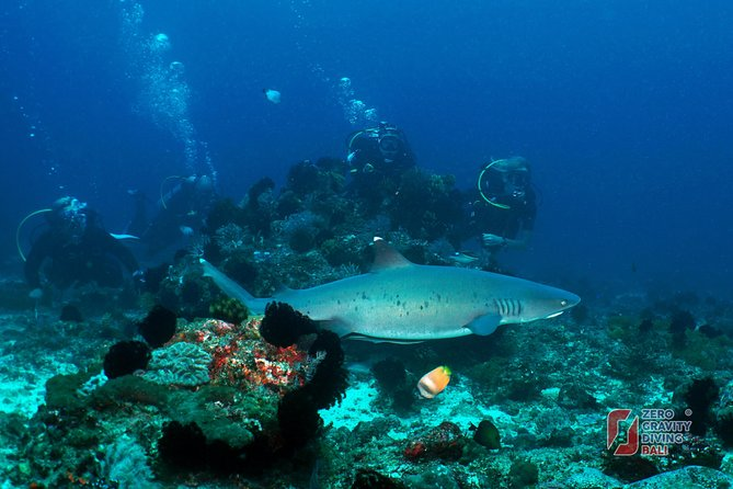 Scuba Diving at Padangbai: Shark Point and Blue Lagoon