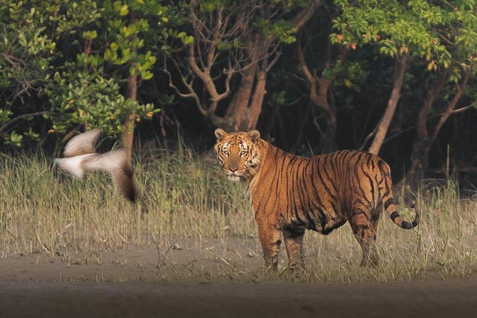 Sundarban Jungle Tour 1 Night 2 Days