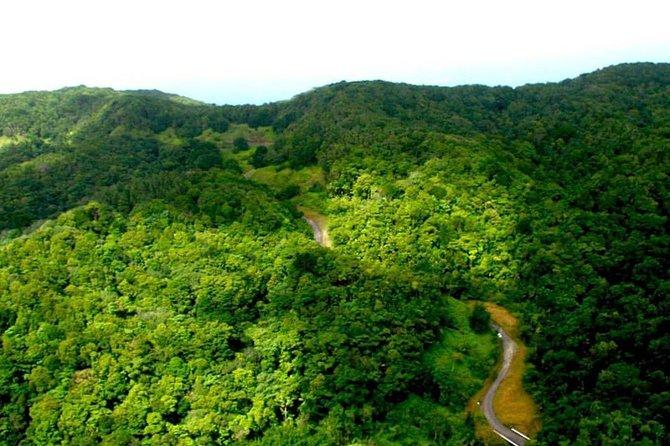 Tobago Rain Forest Tour
