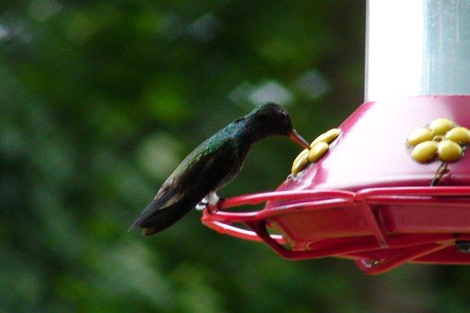 Ein Tag im Asa Wright Nature Center