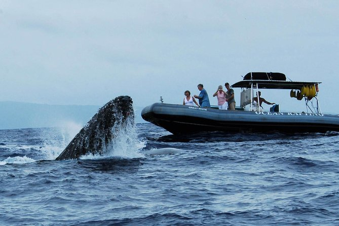 Up-Close Whale Watch Boat Tour from Lahaina