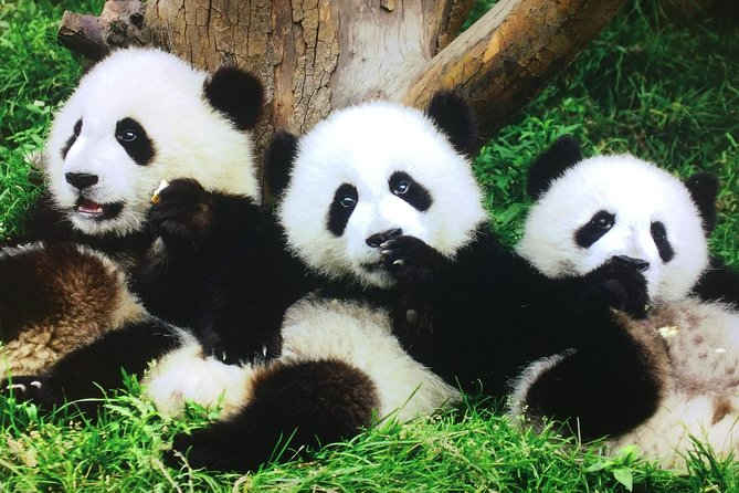 All Inclusive Private Tour:2-Day of Xian and Chengdu with Hotel Accommodation
