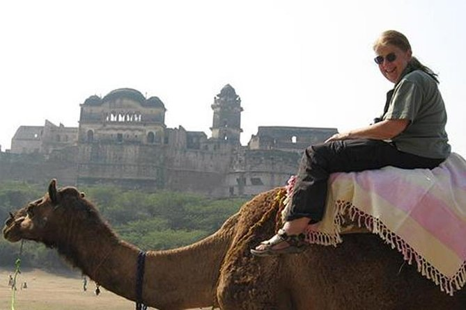 Same Day Trip To National Chambal Sanctuary From Agra With Camel Safari