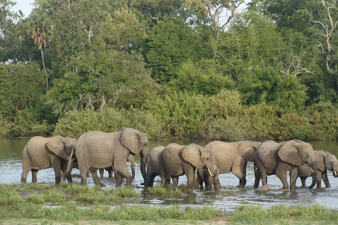 3 Days Selous Escape from the usual, Short Tanzania Safaris.