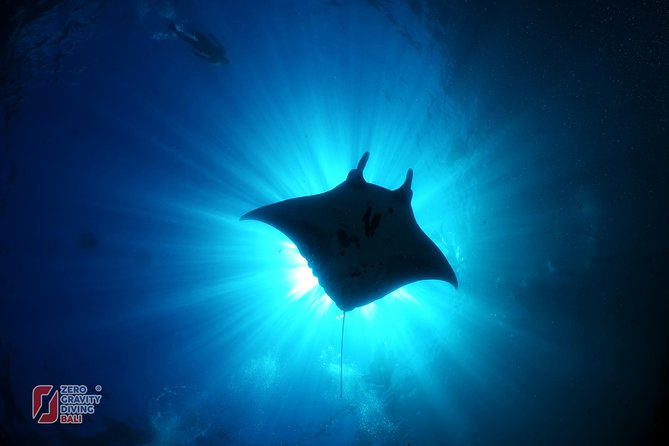 Scuba Diving with Manta Rays at Nusa Penida & Lembongan