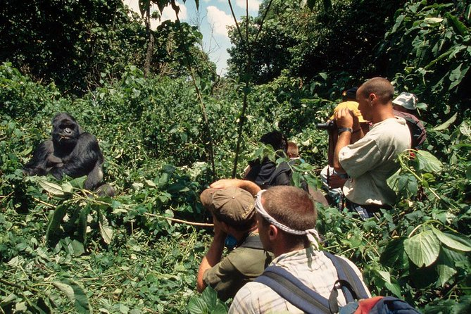 3 Days Gorilla Hiking Safari To Bwindi Impenetrable Forest Park photo 4