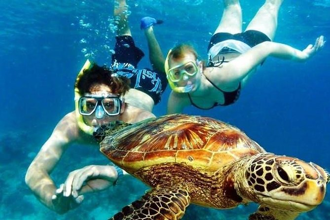 Guided Coral Reef Snorkeling Tour
