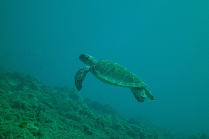 Guided Scuba Tour From The Shore photo 2