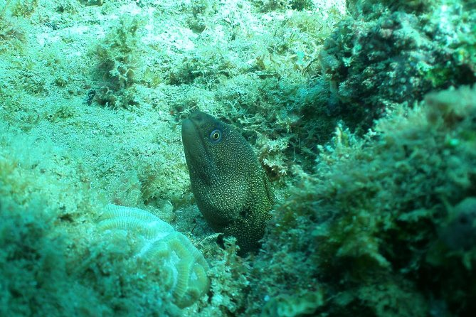 Guided Scuba Tour From The Shore photo 8