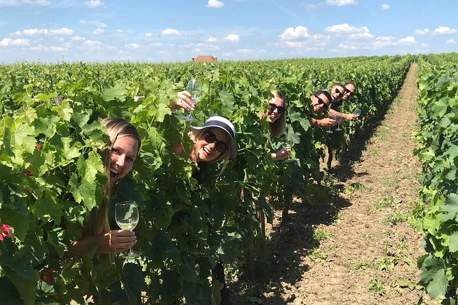 Medoc or St-Emilion Small-Group Wine Tasting and Chateaux Tour from Bordeaux